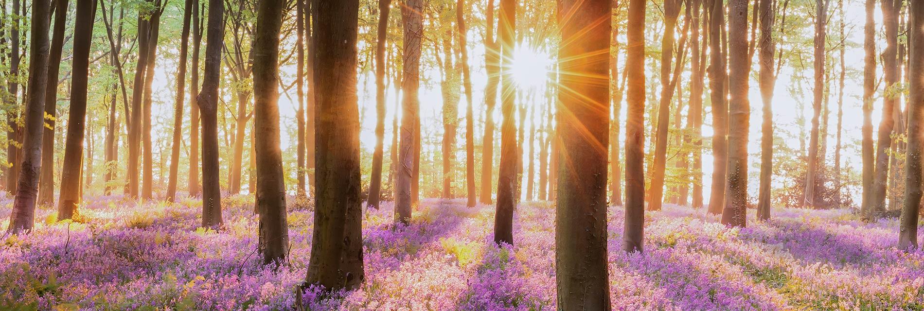sunrise in woods